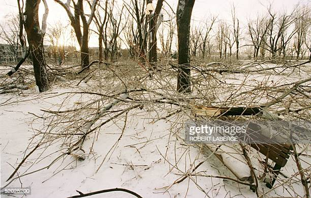Sir Wilfrid Laurier park in Montreal Quebec looks devastated after a fiveday icestorm that reportedly brought down some 20000 trees in the city of...