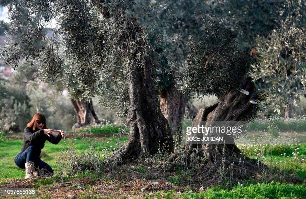 Sira Plana cofounder of Adopt an Olive Tree gestures as she visits an olive grove in Oliete northeastern Spain on December 17 2018 Residents began...