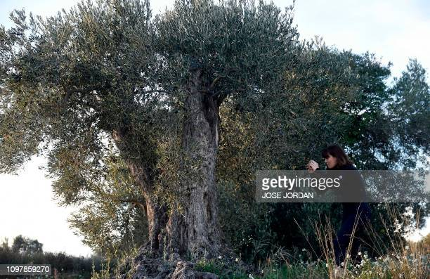 Sira Plana cofounder of Adopt an Olive Tree pictures one in Oliete northeastern Spain on December 17 2018 Residents began moving away from rural...