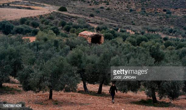 Sira Plana cofounder of Adopt an Olive Tree strolls along an olive grove in Oliete northeastern Spain on December 17 2018 Residents began moving away...