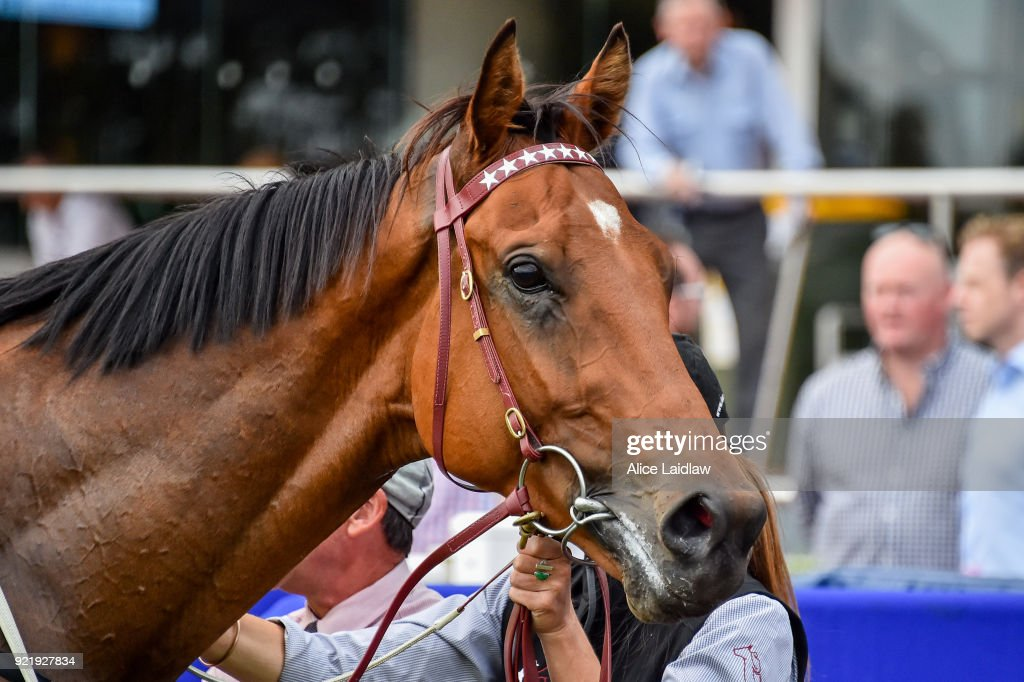 Sirius Suspect after winning the Nick Johnstone Real Estate BM64 Handicap at Caulfield Racecourse on February 21, 2018 in Caulfield, Australia.
