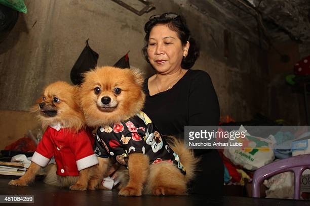 Siska workshop owner and fashion designer boutique Doggy tries on fahion clothing designs for two pet dogs Winston and Hannah on March 28 2014 in...
