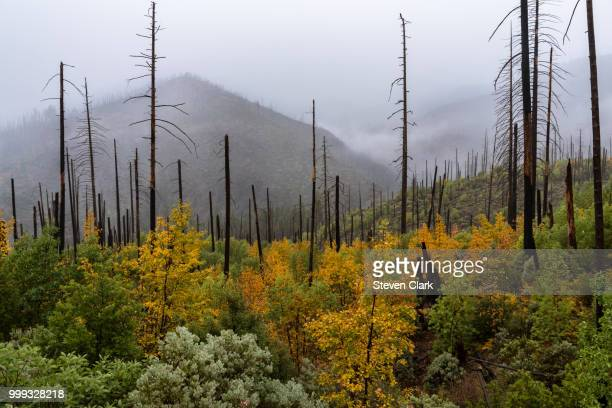 a siskiyou fall - siskiyou stock pictures, royalty-free photos & images