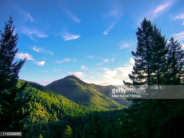 siskiyou wilderness, del norte county, california - siskiyou stock pictures, royalty-free photos & images