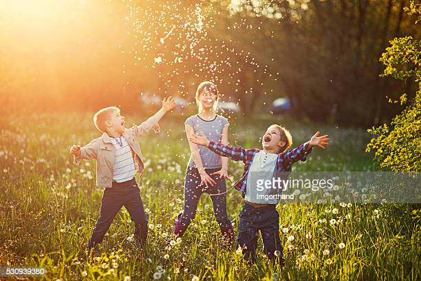sister and brothers playing in dandelion field - springtime stock pictures, royalty-free photos & images
