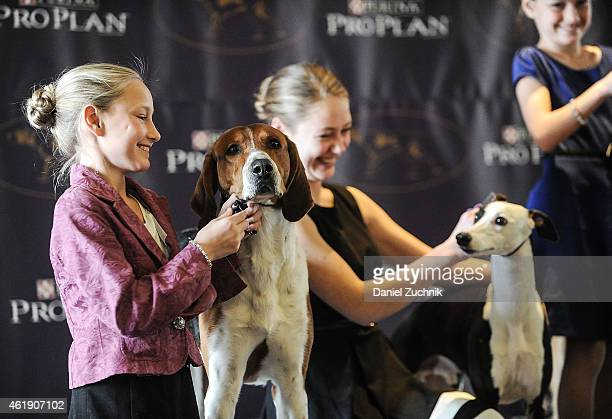 Sisters Faith and Sophia Rogers with their dogs Erik a Whippet Joy a Great Dane and Bobby an American Foxhound attend the 2015 Westminster Week...