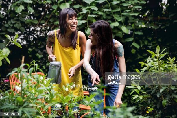 zusters tuinieren planten in de achtertuin van het huis - bloem plant stockfoto's en -beelden