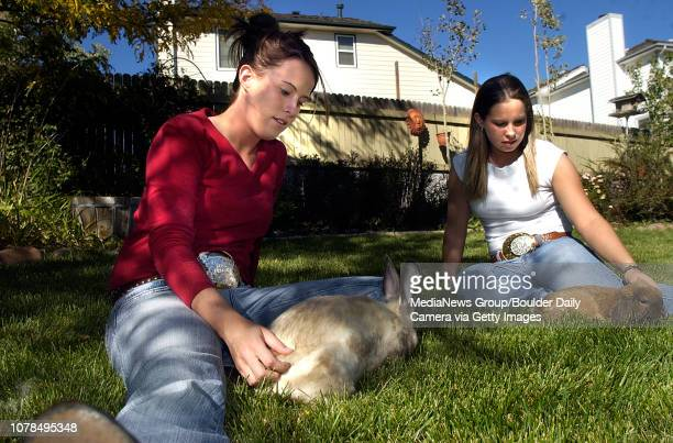 Sisters Kaitlin left and Bridget Buzeck play with their 4H rabbits Odin left a Siamese Satin and Rascal a Holland Lop at their home on Thursday They...