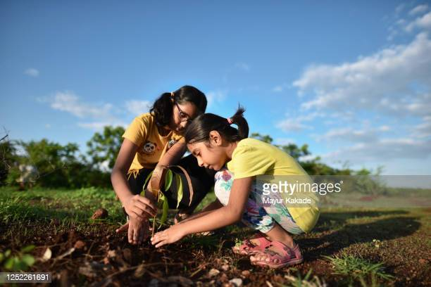 sisters planting a mango tree plant - tree stock pictures, royalty-free photos & images