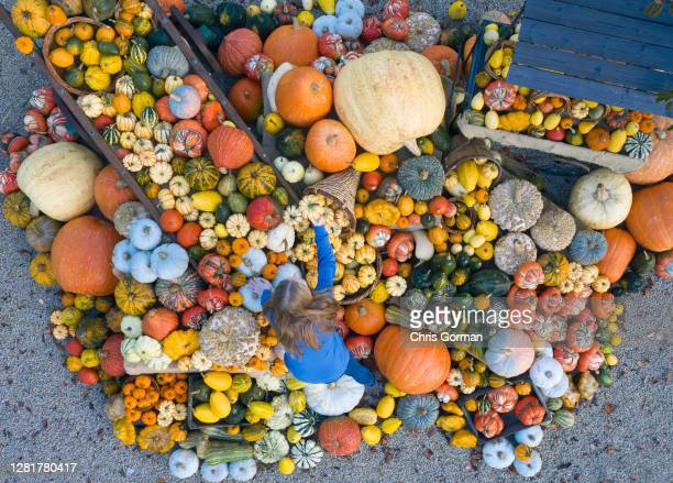 Site administrator Jess Costello puts the finishing touches to a display of Pumpkins at RHS Garden Wisley on October 16,2020 in Wisley,England. RHS...