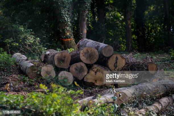 Site where tree felling is currently taking place for the HS2 high-speed rail link is pictured on 11 September 2020 in Denham Green, United Kingdom....