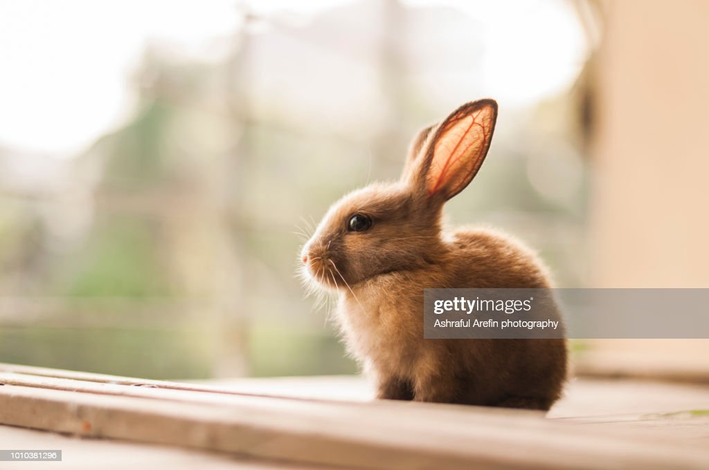 Image of: Wild Sitting Baby Bunny Getty Images Baby Rabbit Stock Photos And Pictures
