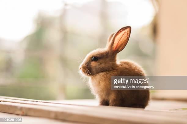sitting baby bunny - coniglietto foto e immagini stock
