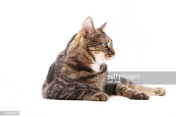 Chat assis dans le profil
