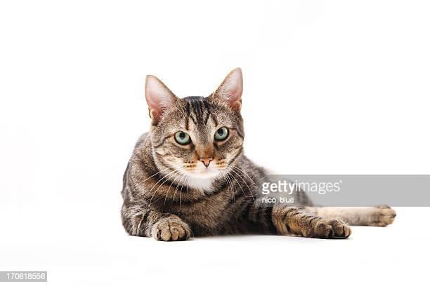 Sitzt cat