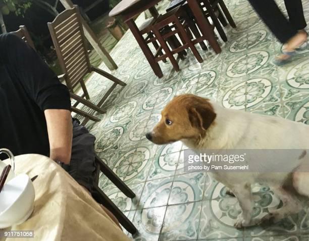 sitting dog begging table-side, mekong delta, vietnam - inclinando se - fotografias e filmes do acervo