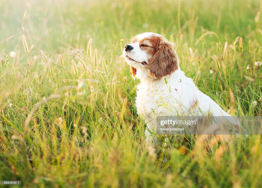 Sitting dog : Stock Photo