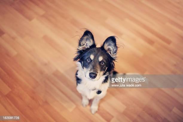 sitting puppy - cary stockfoto's en -beelden