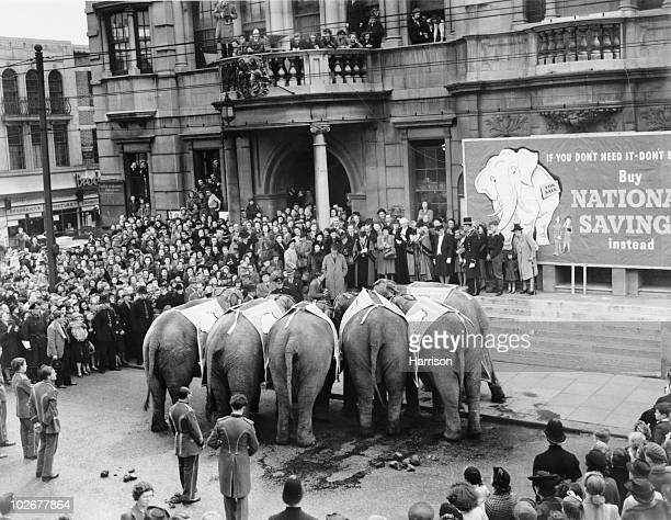 Six circus elephants outside Ilford Town Hall 5th May 1948 The animals from the Bertam Mills circus are going to point their trunks at the poster on...