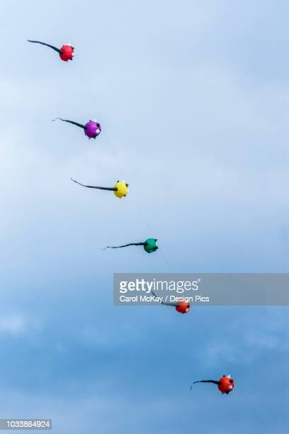 six colourful spherical kites diagonally aligned flying against a blue sky - blue balls pics stock pictures, royalty-free photos & images