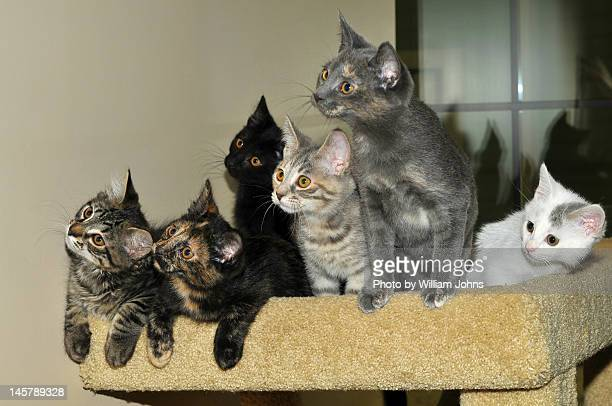 Six curious kittens