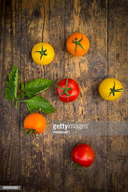 Six different tomatoes on wood