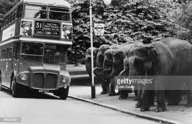 Six elephants apparently waiting for a 31 bus in Battersea Park London July 1980 The elephants are Mary Maureen Janie Ann Beverley and Rebecca from...