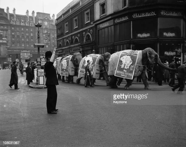 Six elephants from the Bertam Mills Circus on their way from Victoria to Olympia in London 13th December 1948 They are promoting the British...