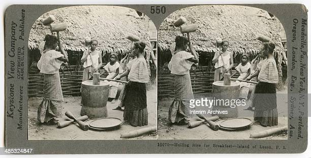 Six girls or young women hull rice by pounding the grains with heavy wooden mallets Philippines 1906
