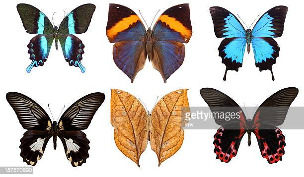 Six isolated butterflies