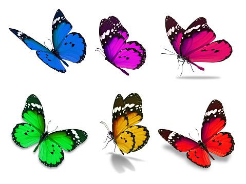 six monarch butterfly 1030125014