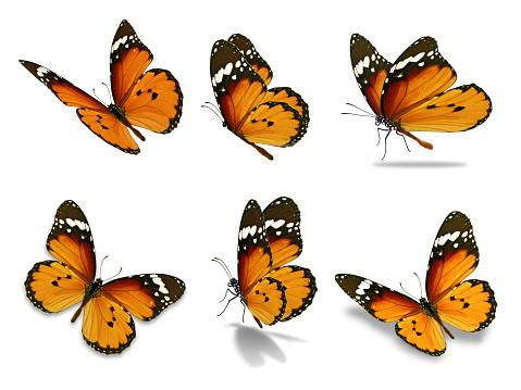 six monarch butterfly 680833460