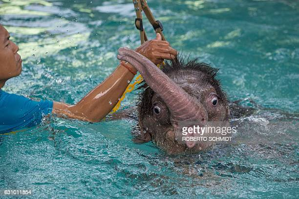 Six monthold baby elephant 'Clear Sky' is kept afloat with the help of a harness during a hydrotherapy session at a local veterinary clinic in...