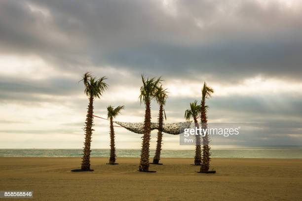 Six palm trees on the beach of the mediterranean sea (St. Cyprien, France)