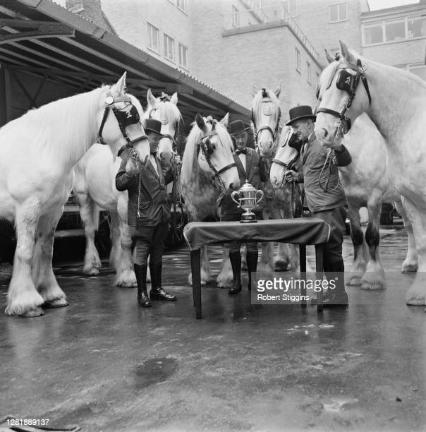 Six Shire horses looking at the Whitbread Gold Cup UK 12th April 1966