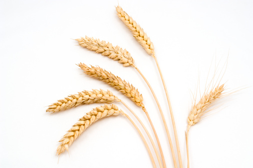 Six stems of wheat on a white background 157311390