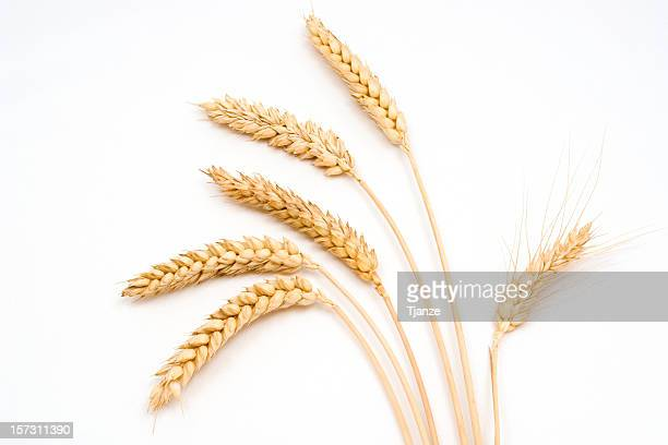 six stems of wheat on a white background - wheat stock pictures, royalty-free photos & images