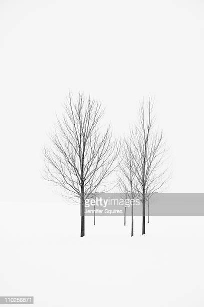 Six trees in snowy field