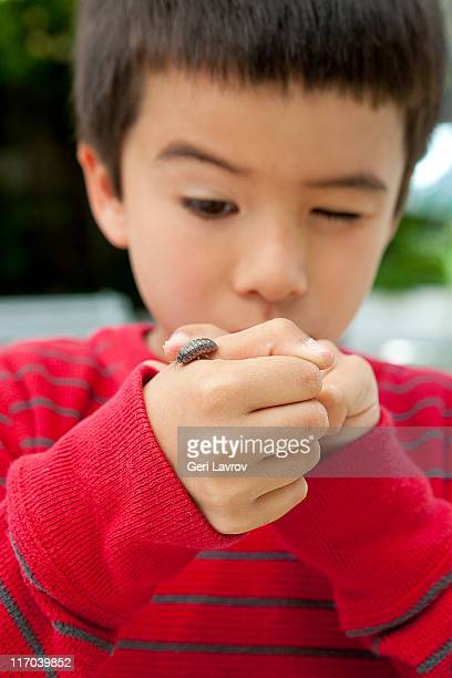 six year old boy looking at a sow bug on his hand - potato bug stock pictures, royalty-free photos & images