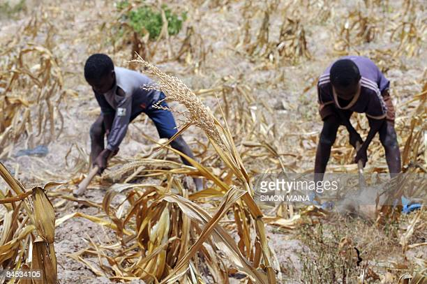 Six yearsold Juma Dalu and his brother Charo Mwatsalu plough their family dried corn field on January 27 2009 in KwaleThe Kenyan finance minister...