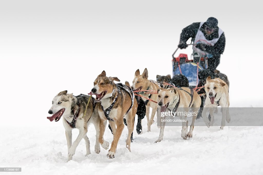 Six-Dog sledding competition race : Stock Photo