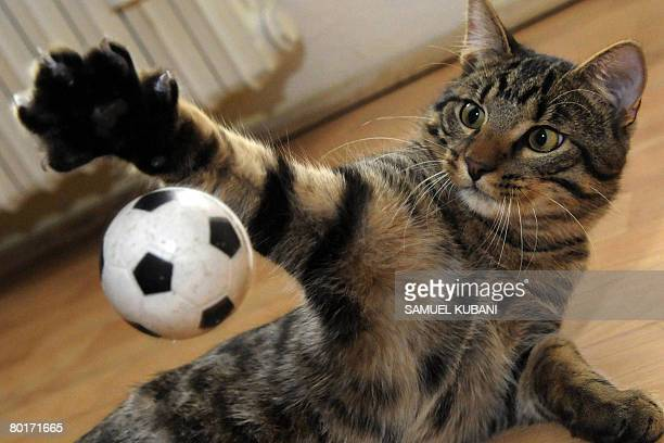 A sixmonth old cat plays with a football ball in Bratislava on March 8 2008 AFP PHOTO / SAMUEL KUBANI