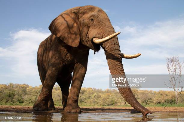 size matters - waterhole stock pictures, royalty-free photos & images