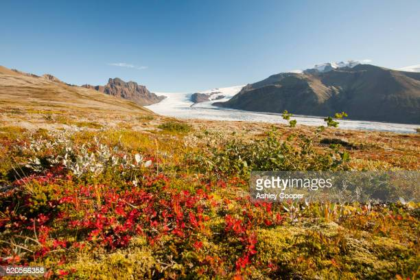 skaftafellsjokull in the skaftafell national park, iceland - tundra stock pictures, royalty-free photos & images