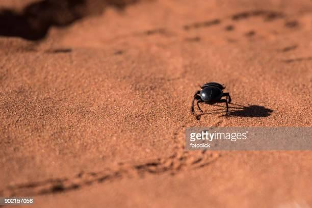 Skarabäus Läuft Auf Sand