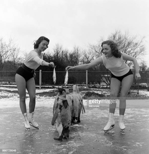 Skating starlets from Sinbad on Ice now playing at London's Empress Hall visited Whipsnade Zoo in Bedfordshire to skate on the pond withe penguins...