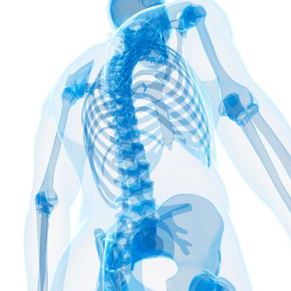 skeletal back 450160341