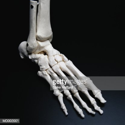 Skeletal Foot Stock Photo Getty Images