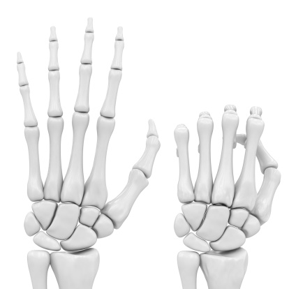 skeletal hand 176839757