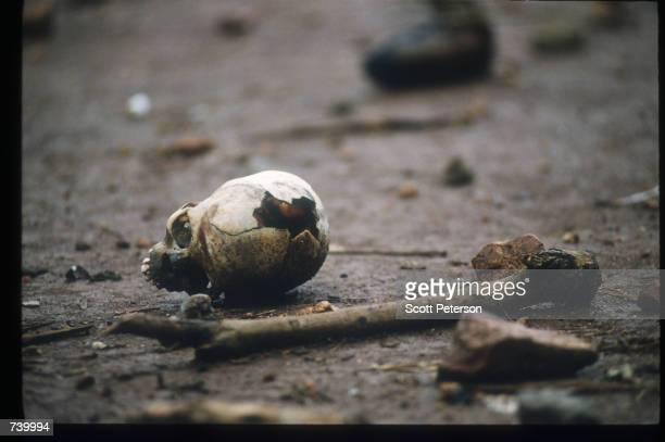Skeletal remains are strewn on the grounds of the Catholic mission May 5 1994 in Rukara Rwanda Hundreds of Tutsis were killed at the Rukara Catholic...